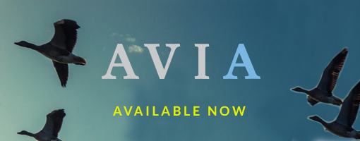 Avia new apartments buildings for rent in Parks of West Bedford